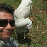 Bogo_PiggyFarm (34)