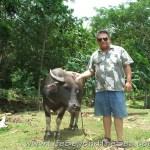 Bogo_PiggyFarm (40)