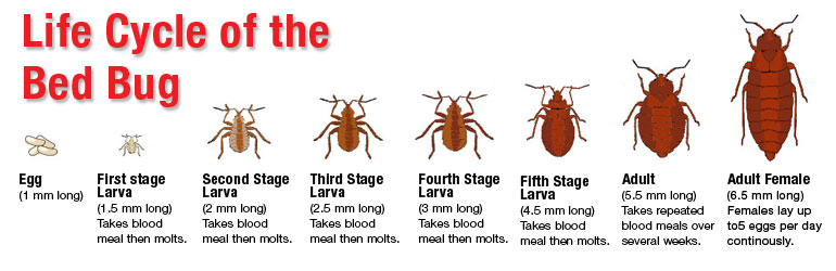 How to Get Rid of Bed Bugs in Less Than 72 Hours?
