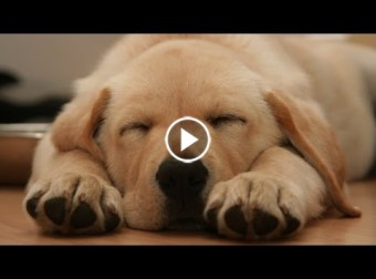 Top 10 dogs you'll love and fall for!