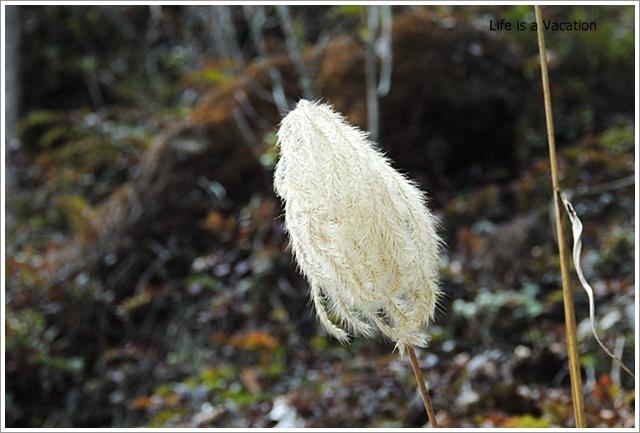 Sandakphu_White_Flower