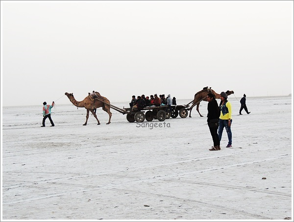 Scenes from the Salt Desert: Great Rann of Kutch, India