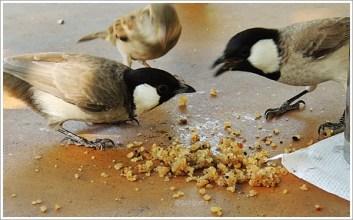 Jaisalmer_DesertBoys_Sparrow
