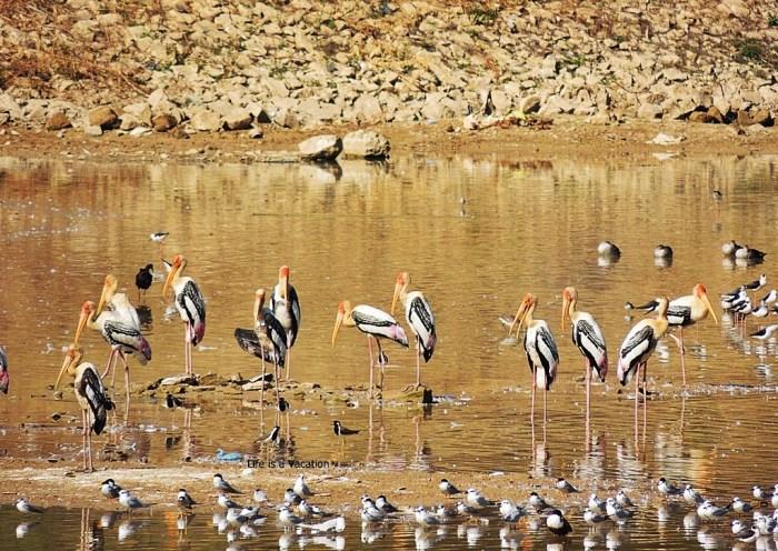 Bhuj Sightseeing Hamirsar Lake