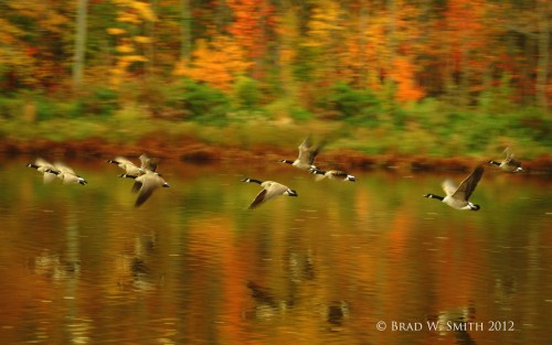 Fall, the Smell of Beginning Anew, Brad W. Smith photographer, LifeIsHOTBlog,autumn trees reflected on water, flock of geese