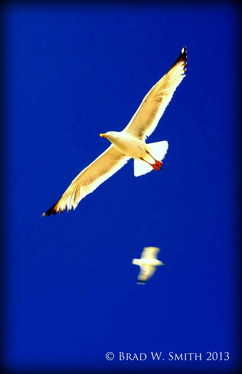 two seagulls soaring high against a blue sky