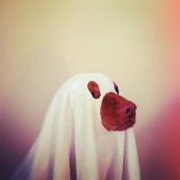 costume | lifelove+lucy