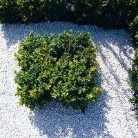 Технология садового мощения - как создать интересное пространство