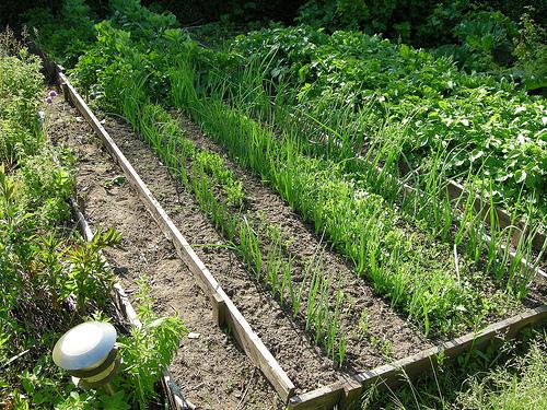 Как сделать правильные грядки на огороде - их оптимальная высота и ширина