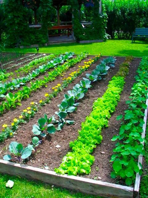 Планировка огорода под посадку овощей - секреты успешного урожая