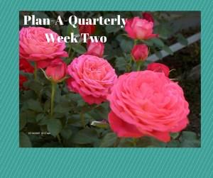 PAQ Week 2 image
