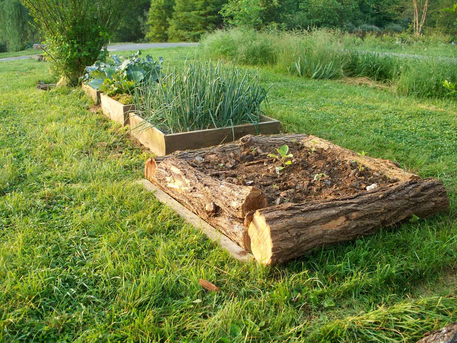 elevate your denver garden with a raised bed - lifescape colorado