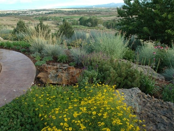 xeriscaping colorado
