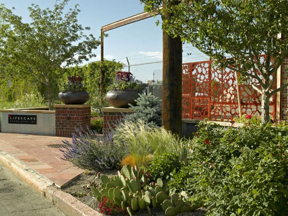 Decorative Design Features for the Summer Xeriscaped Landscape