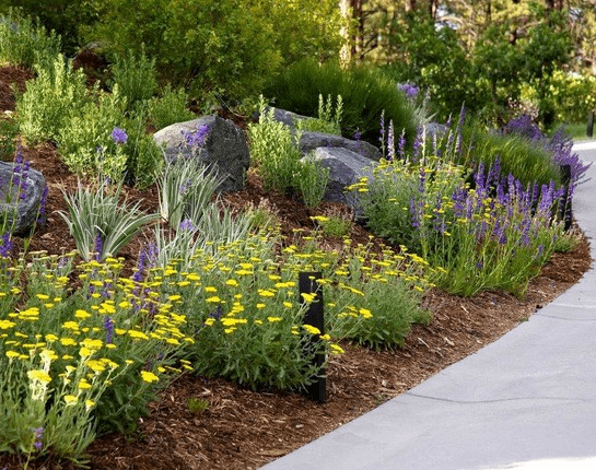 Water Saving Tips for Water-Wise Landscapes