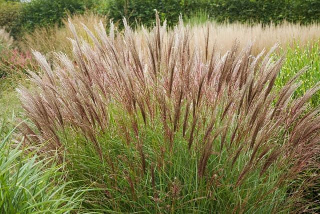 Drought tolerant landscape in colorado archives lifescape colorado - Drought tolerant grass varieties ...