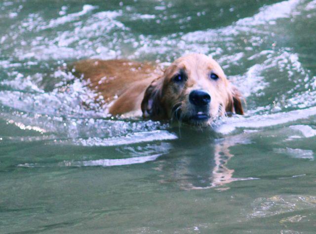 10-sept-16-cabella-swimming