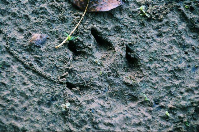 10-sept-16-pawprint