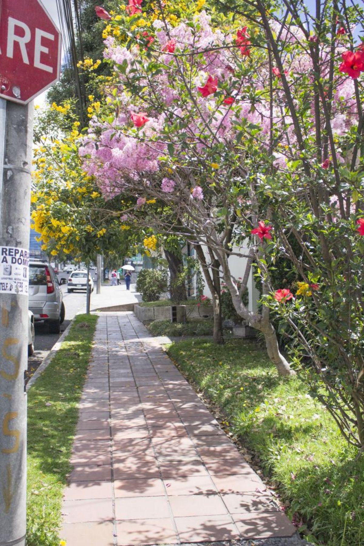 cómo vivir en las calles de Quito 2