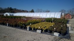 Small Of Spring Hill Nurseries