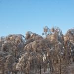 Деревья на грани...