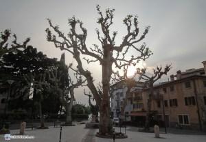 Что это интересно за дерево?