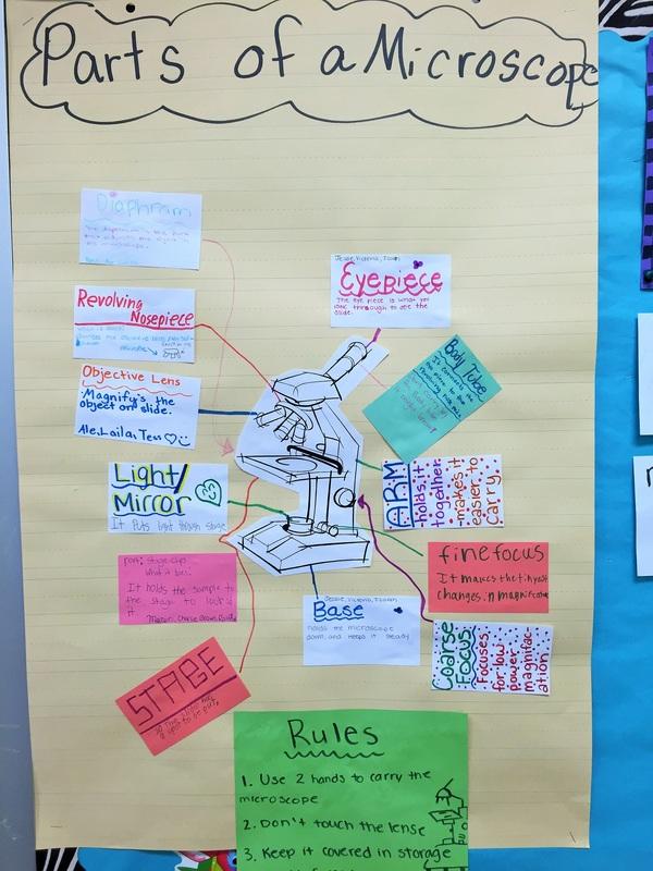 Student Created Anchor Charts - anchor charts