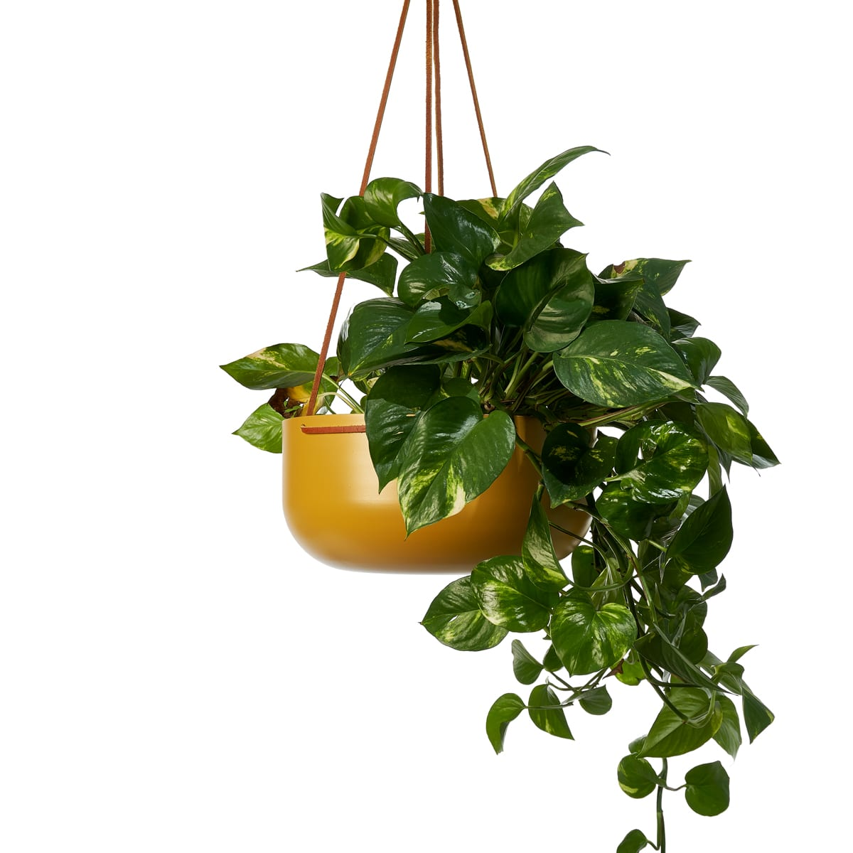 Hanging Planters Australia Hanging Planter Large In Turmeric With Leather Straps By