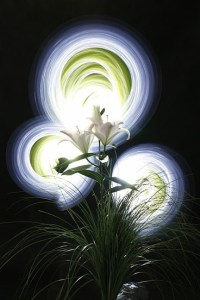 lightpaint2010-liliumopen