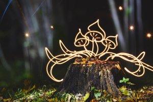 Light painting Autumn - mushrooms