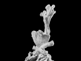 Julian Charrière: Tropisme, 2014, Heliogravüre, Courtesy of the artist und Galerie Tschudy