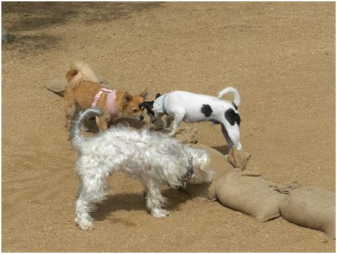 Wordless Wednesday – Culver City Dog Park Finally Open! (6/6)