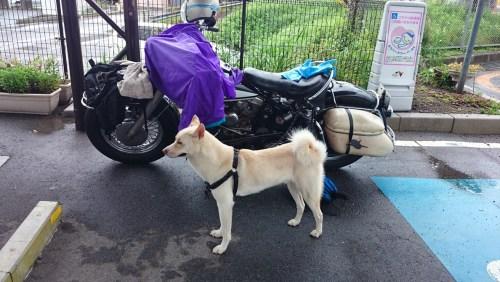 リリーのライダーズカフェ 犬 背負う