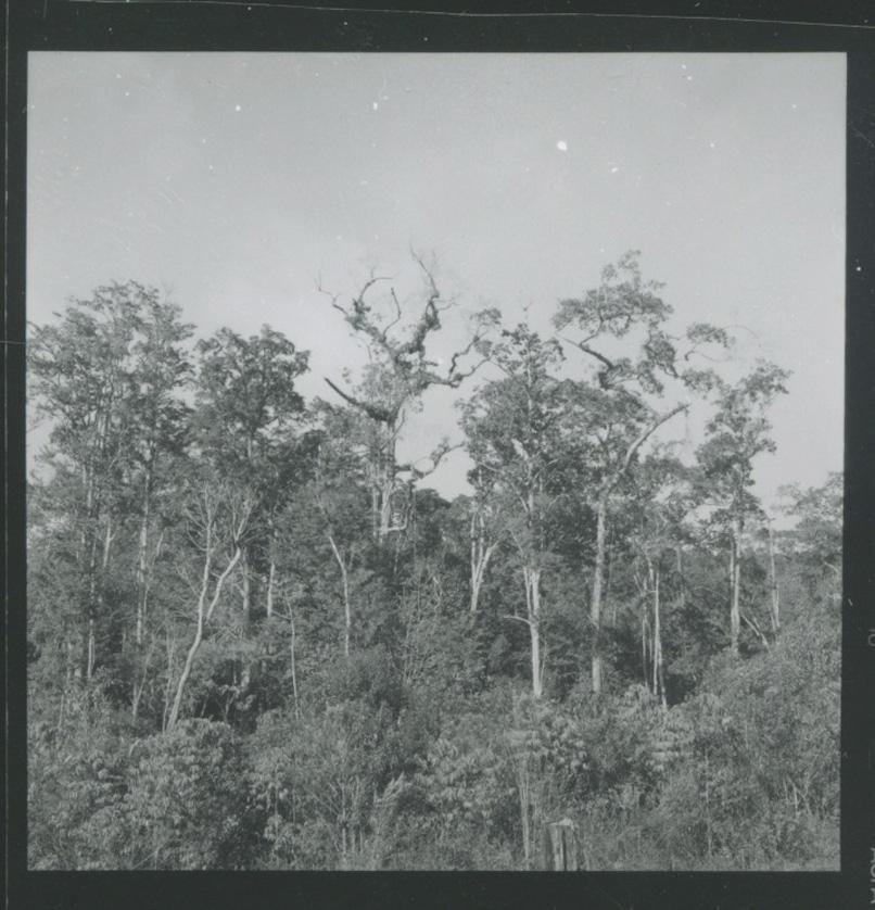 Na-Ma,-1962-3