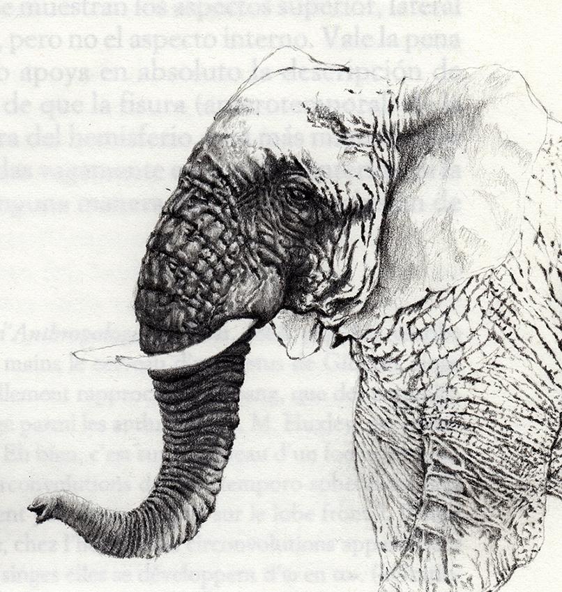 Detalle-elefante
