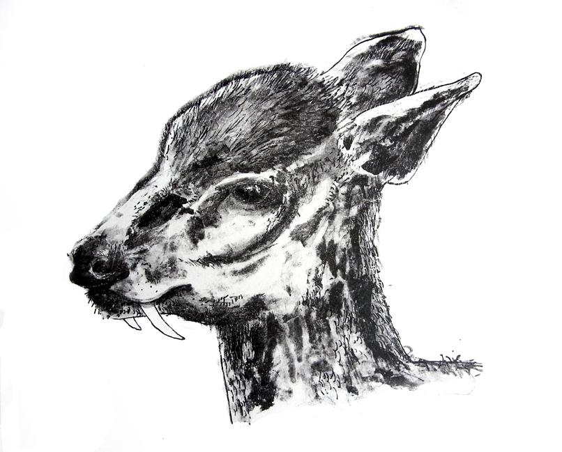 ciervo-colmillos