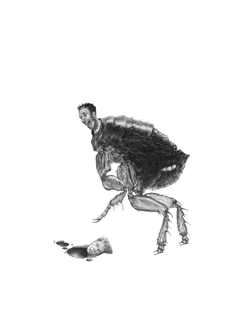 Bestiario de animales inexistentes dibujos y descripciones17 (1)
