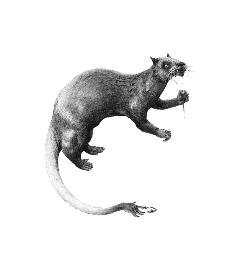 Bestiario de animales inexistentes dibujos y descripciones21 (1)