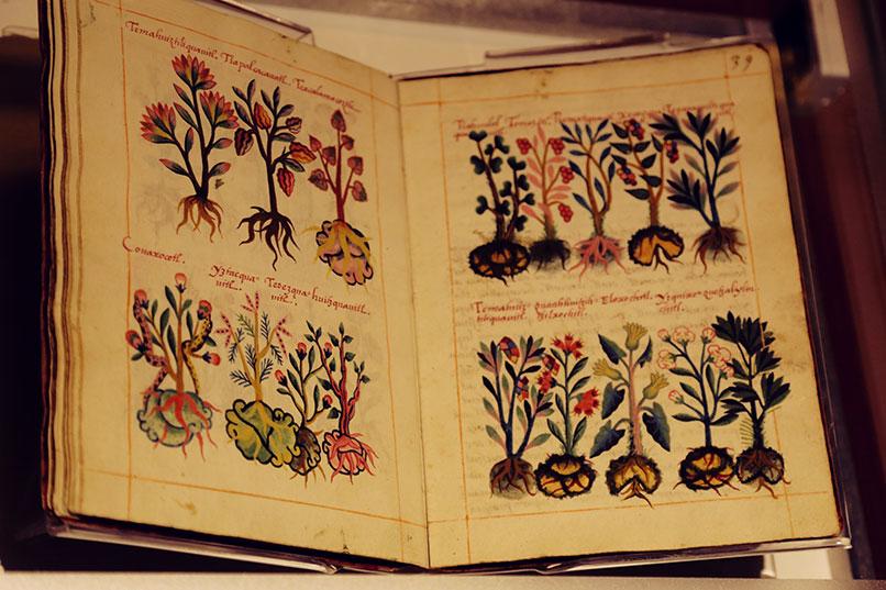 limulus_Libellus_Medicinalibus_Indorum_Herbis_MNA