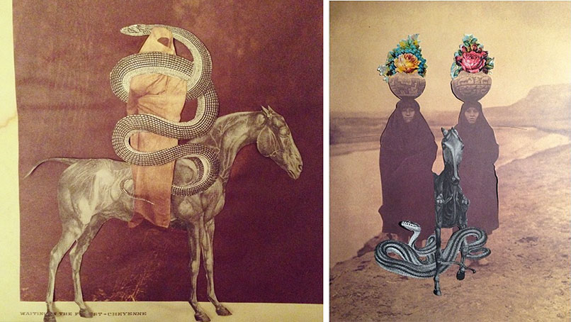 collage_ana_noble_limulus_8