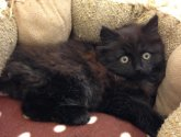 Grimsby kitten in need of home after being found starved and abandoned in tree