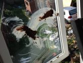 Dog mess smeared on walls and windows of Sutton Bridge council house