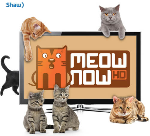 Shaw TV introduces Meow Now HD.
