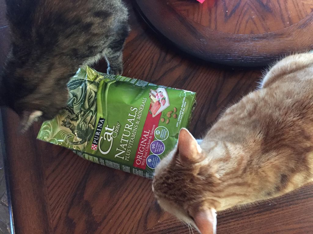 Thor and Loki, eager to dig into their Purina Cat Naturals!