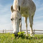Domestic arabic horse, low angle shot
