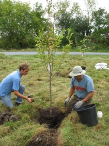 planting fruit trees in VT