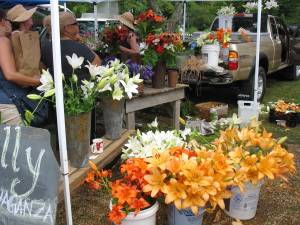 lilies at farmers market