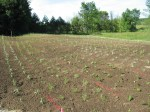 planting a meadow