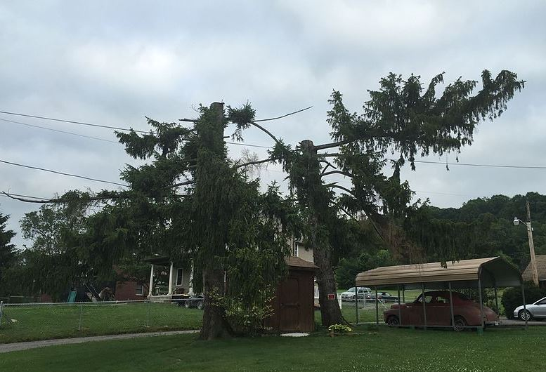 tree topping - Lineage Tree Care