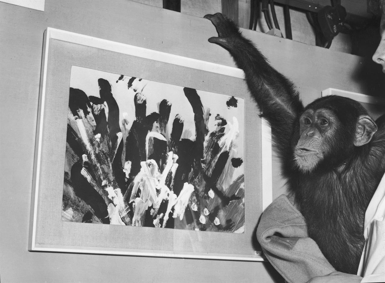Congo The Chimp La Scimmia Che Dipingeva Quadri Surrealisti Linkiesta It